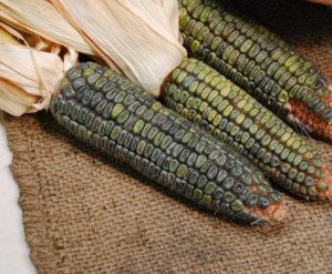 green_corn