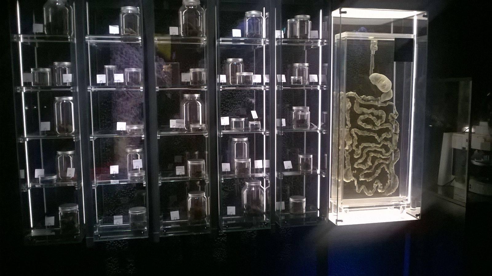 Microorganisme în Micropia, Amsterdam