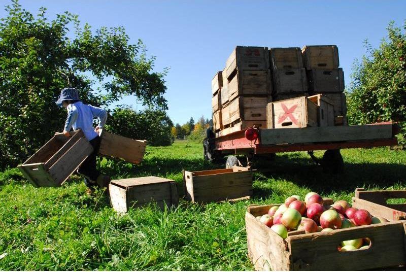 investițiile-afir-interes-finantari-pomicultura