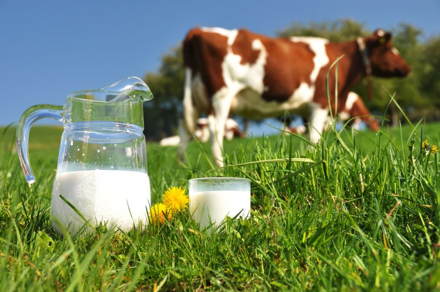 importam-lapte-vaca