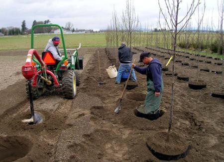 înfiinţarea de plantaţii forestiere