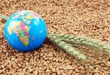 prețuri-cereale-agrogo-grâu-cerealelor